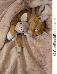 roze, het rusten, speelbal, kat, ligt, varken, zacht, rood
