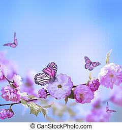 roze, kers, butterfly;, bloem, oosters