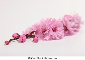 roze, kers, witte bloesem