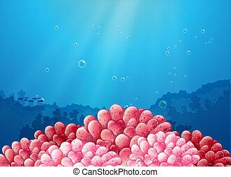 roze, koraal, zee, onder
