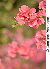roze, lente, floral, achtergrond