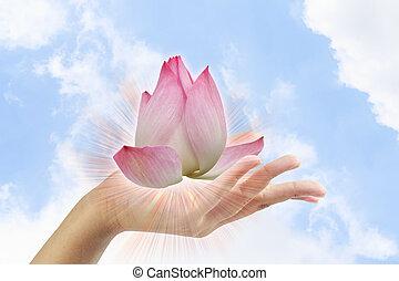 roze, lotus, in, vrouw, overhandiig op, hemel, achtergrond.