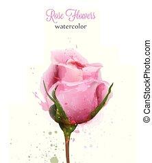 roze, mooi, card., roos, trouwfeest, achtergronden, vrijstaand, of, watercolor, vector, uitnodiging, datum, sparen, template.