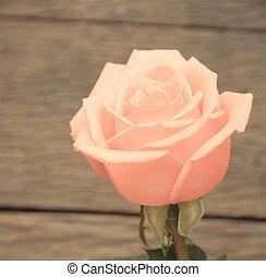 roze, ouderwetse , stijl, rozen