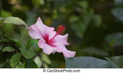 roze, park, orchidee