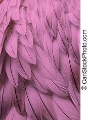 roze, pluizig, veer, closeup