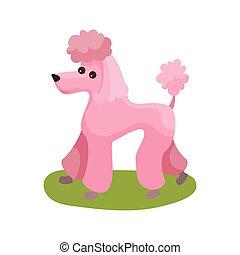 roze, purebred hond, kleurrijke, aanhalen, poedel, illustratie, staand, vector, groene, dier, gras