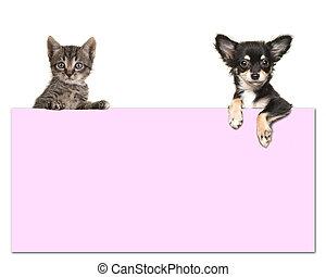 roze, schattig, chihuahua, kamer, tekst, tabby, dog, kat, papierbord, achtergrond, vasthoudende baby, witte
