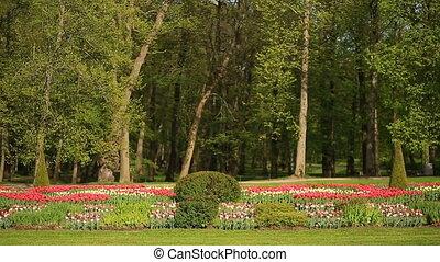 roze, stad, groente, tulpen, flowerbed, tegen, park., bomen,...