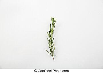 rozemarijn, vrijstaand, in, witte achtergrond