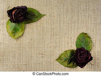 rozen, droog, achtergrond, rood