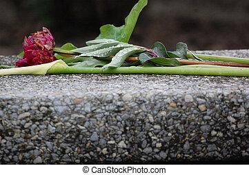 rozen, in, cemetary-2