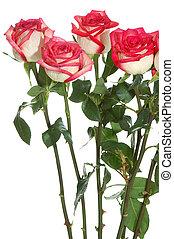 rozen, lange stam