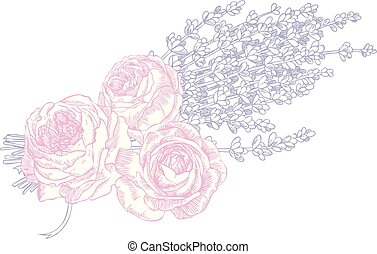 rozen, lavendel, &