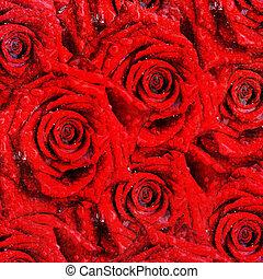 rozen, rood