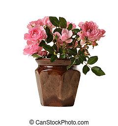 rozen, roze, kleine