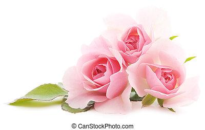 rozen, roze
