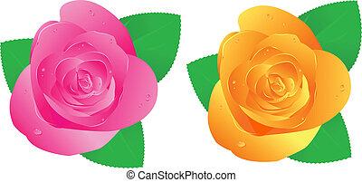 rozen, twee, waterdrops