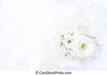 rozen, witte , bokeh