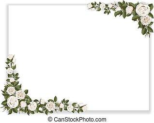 rozen, witte , papier, blad, verfraaide