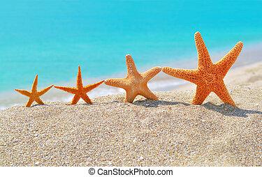 rozgwiazdy, plaża