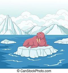 rozmár, karikatúra, úszó jégtábla, jég