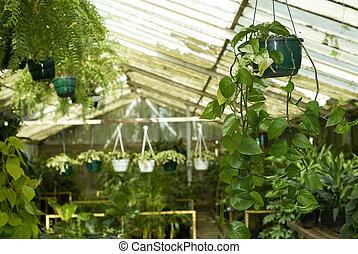 rozmaitość, od, pokój dziecinny, rośliny