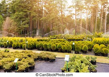 rozmaitość, od, rośliny, na, na wolnym powietrzu, drzewo pokój dziecinny