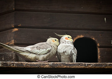 rozmowa, dwaj ptaszki