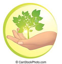 rozwój, drzewo, ręka