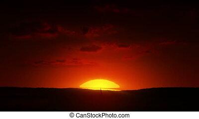 rozwój, drzewo, wschód słońca