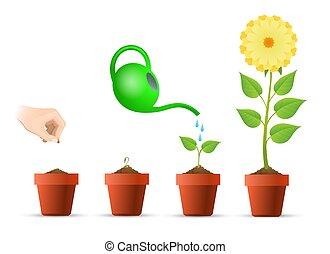 rozwój, roślina, gradacja, garnek