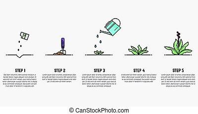 rozwój, roślina, gradacja