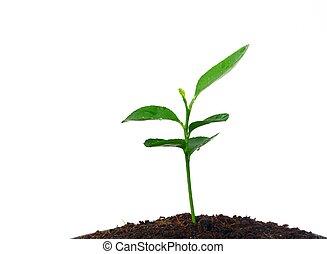 rozwój, rośliny