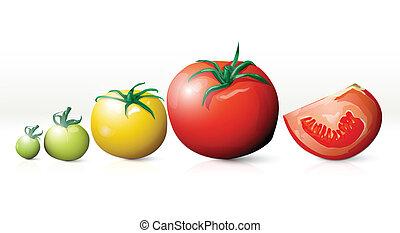 rozwój, wektor, pomidory