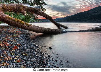 rozwój, zachód słońca, drzewo, jezioro, tło