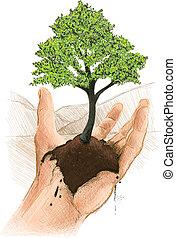 rozwój, zielone drzewo