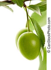 rozwój, zielony, śliwki