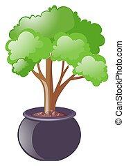 rozwój, zielony, garnek, drzewo