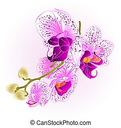 ru Stem with flowers and buds beautiful Orchid purple and white vector.eps