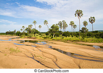 A riverbed lined with palm trees in Ruaha National Park, Tanzania