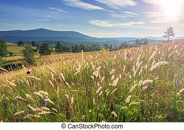 Ruaral landscape with wildflowers and mountains on horizon.