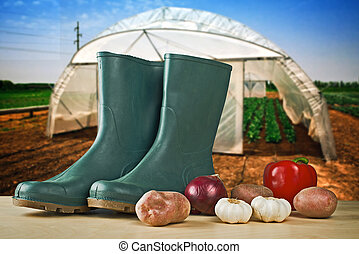 Rubber boots and various vegetable with greenhouse in background. Gardening concept - growing vegetables in home garden.