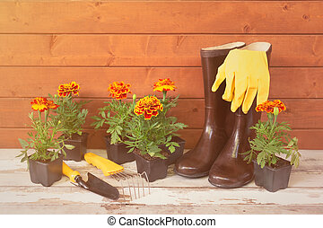 Rubber boots, gloves, seedlings of marigold flowers and gardening tools on aged wooden table.