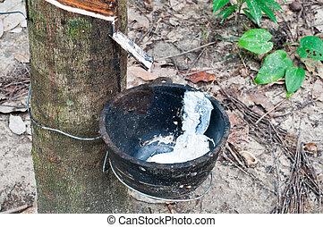rubberboom
