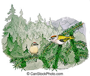 Ruby-crowned Kinglet - Ruby-crowned and Golden-crowned...