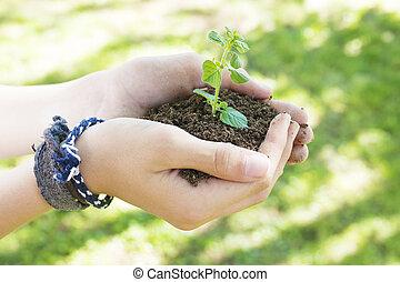 ruce, o, ta, dítě, s, ta, výbuch, o, ta, bylina, ekologie, a, prostředí