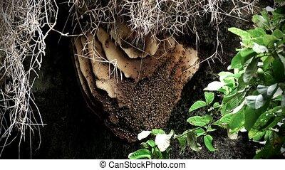ruche, abeilles, caverne, sauvage, pendre, toit