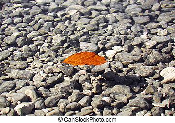 ruchomy liść
