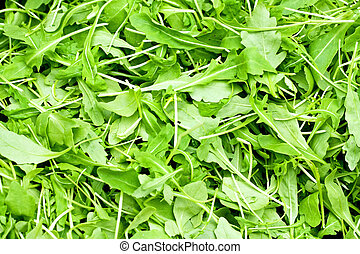 Rucola - Bunch of fresh green organic rucola salad